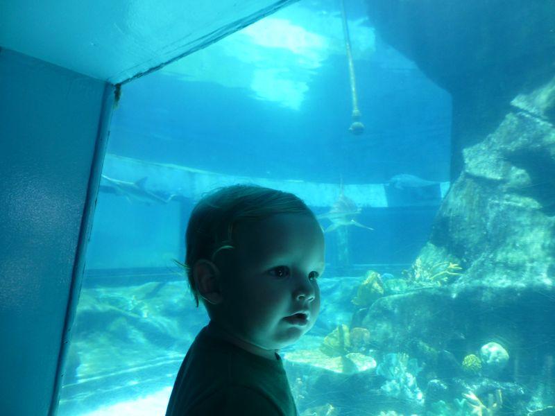 Aquatic park 021
